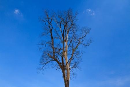 Silhouette tree and blue sky photo