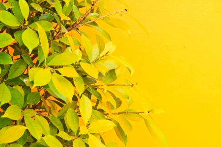 green leaves on yellow wall Stock Photo - 13826076