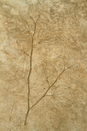sharp curve: The Imprint of leaf on cement floor background