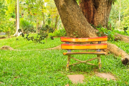 bench is in a morning green park under tree photo