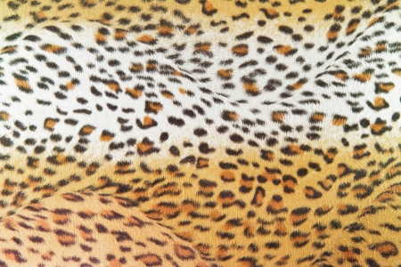 texture leopard Stock Photo - 14206641