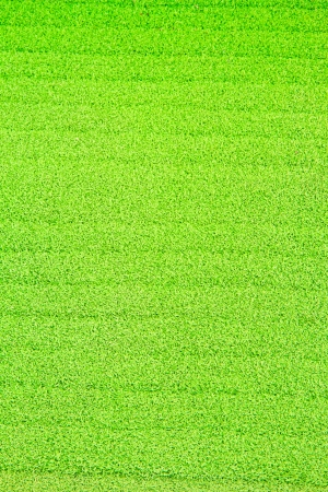 green carpet: Green carpet on background