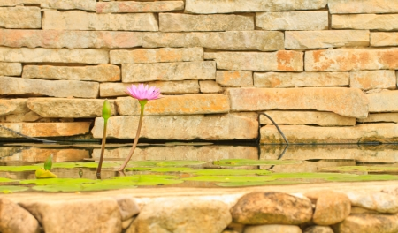 A pink lotus on brick wall in pool Stock Photo - 15379799