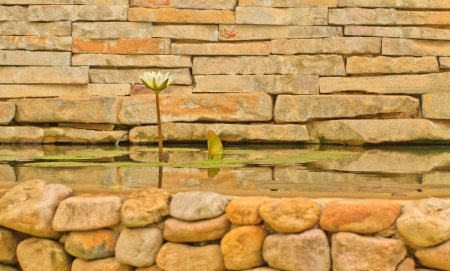 A white lotus on brick wall in pool Stock Photo - 15379827