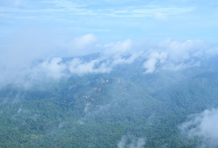morning fog in dense tropical rainforest, Chaiyaphum Province, thailand