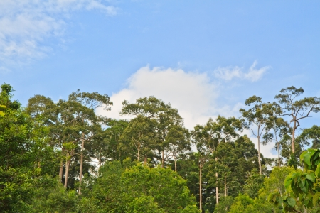 Green forest with bright blue sky photo