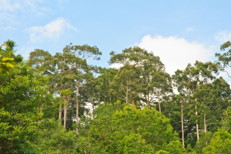 Green forest with bright blue sky Stock Photo - 15605729