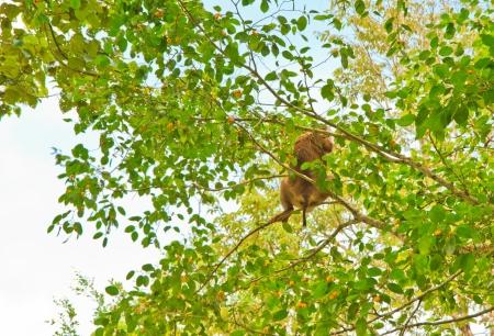 monkey on tree is eating fruit  Stock Photo