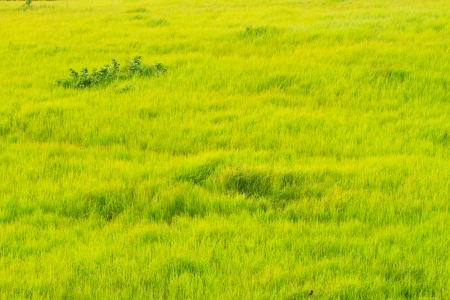 Beautiful green grassland photo