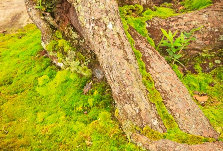 Old mossy trunk in clammy autumn forest Stock Photo - 15732538