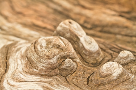 Abstract textured a wood background Stock Photo - 16238293