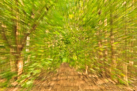forest trees and load  Valence explosion Technique Stock Photo - 16373731