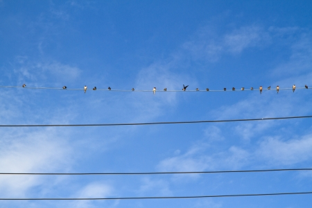 Birds on a wire against blue sky with clouds photo