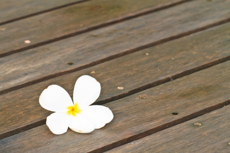 The flower plumeria on wood background photo