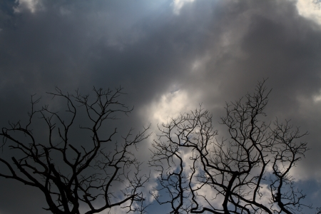 cloudy overcast sky and a silhouette of tree photo