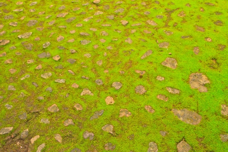 The old concrete  footpath abstract texture and green moss Stock Photo - 17125726