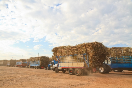 Trucks loaded with sugar cane at  factory