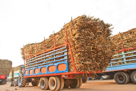 Trucks loaded with sugar cane at  factory photo