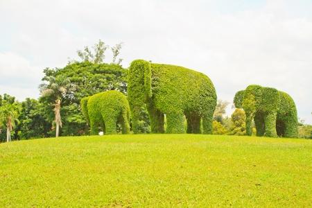 Vert éléphan arbre