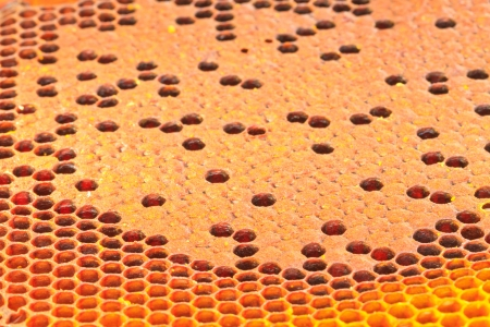 The yellow  honeycomb, Can use background photo