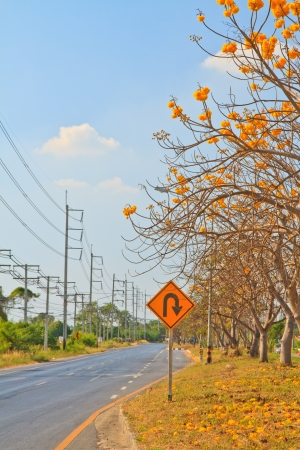 yellow cotton tree near road, u-turn and high voltage post photo