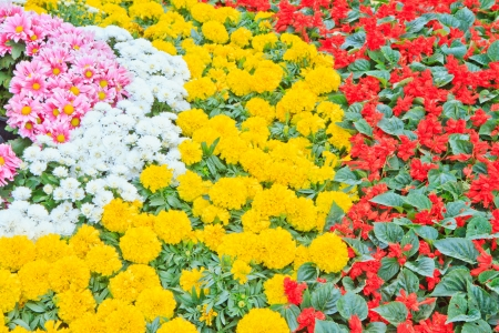 multicolored flowerbed on a lawn  In garden photo