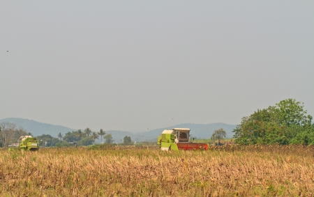 Mature sunflower field is harvesting by  harvest machine at Thailand Stock Photo - 21058638