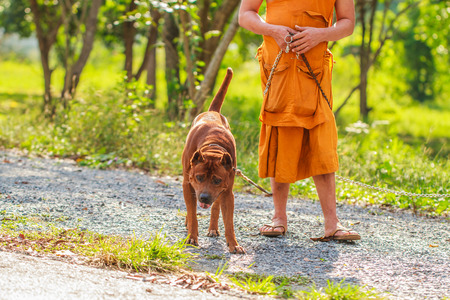 dog with monk owner working on road in the park