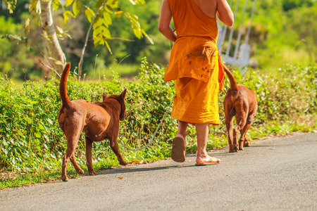 dogs with monk owner working on road in the park 스톡 콘텐츠