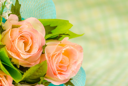 roses on blur green background