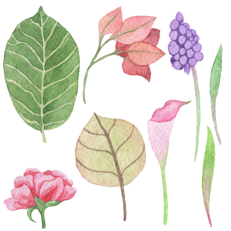 Hand paintings pack. Watercolor floral objects
