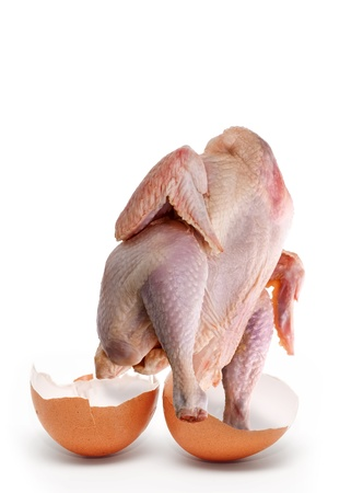 factitious: Chicken