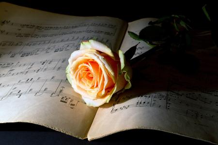 dim light: Yellow rose on an ancient music score on dim light Stock Photo
