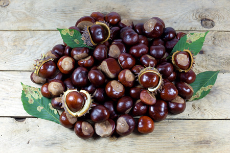 Fresh Chestnuts from an Autumn Harvest on an Old Rustic Wooden Table with Green Leaves photo