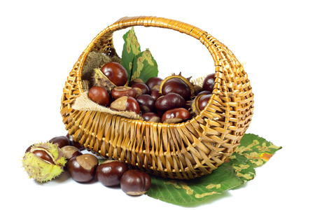 Chestnuts in Wicker Basket on Green Leaves Isolated on White Background photo