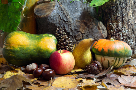 Gourds, Apple, Pear, Chestnuts, Pine cone and Fall Leaves photo