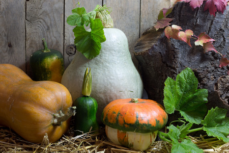 Small and Big Pumpkins with Green Leaves on a Hay in Autumn Still Life, Vintage Wooden Planks Background photo