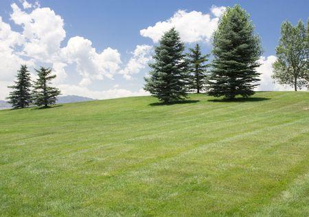 Green Meadow and Deep Blue Sky