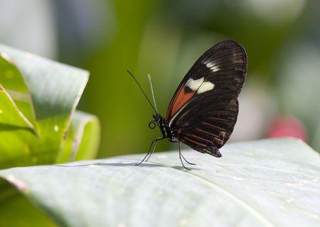 Pretty Butterfly Stok Fotoğraf