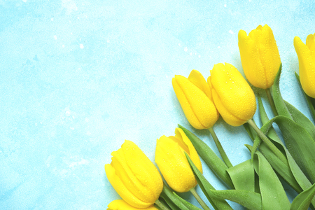 Celebrate background with bouquet of yellow tulips on a light blue slate, stone or concrete background.Top view with copy space. Banco de Imagens