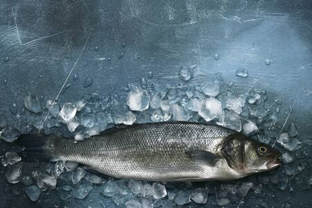Fresh raw sea bass on an ice cubes on a dark blue slate, stone or concrete background. Top view with copy space.