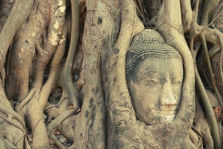 cabeza de buda: Estatua de la cabeza de Buda entrelazada por ra�ces en Wat Phra Mahathat en Ayutthaya, Tailandia
