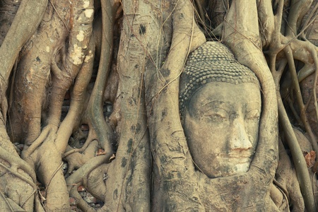 buddha head: Head of Buddha statue entwined by roots at Wat Phra Mahathat, Ayuthaya, Thailand