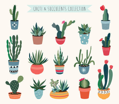 Cacti and succulents collection. Çizim