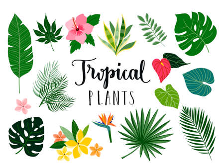 Tropical collection with isolated plants and flowers, vector design