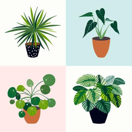 Decorative house plants collection, succulent leaves