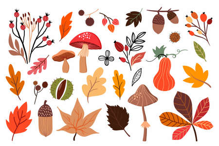 Autumn collection with different leaves, mushrooms and seasonal plants, isolated on white background
