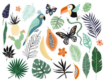Tropical abstract elements collection isolated on white Illustration