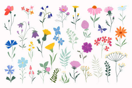 Meadow flowers and plants summer collection, vector design isloated on white background