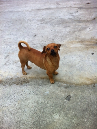 otganimalpets01: My cute doggie Thirdy